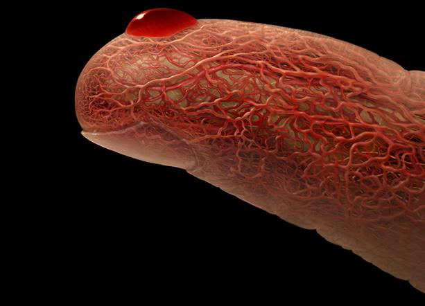 Tévhitek az inzulinrezisztenciáról I. – Mens Mentis Egésszégcentrum cikksorozata